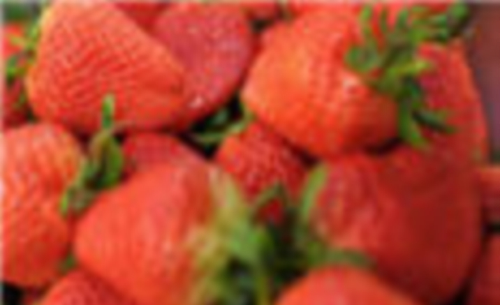Beijing Strawberry Expo Garden