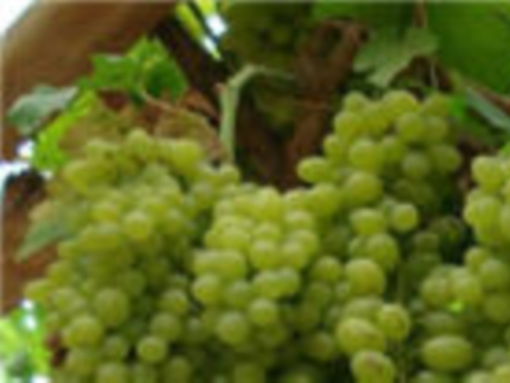 Grape Valley - Turpan