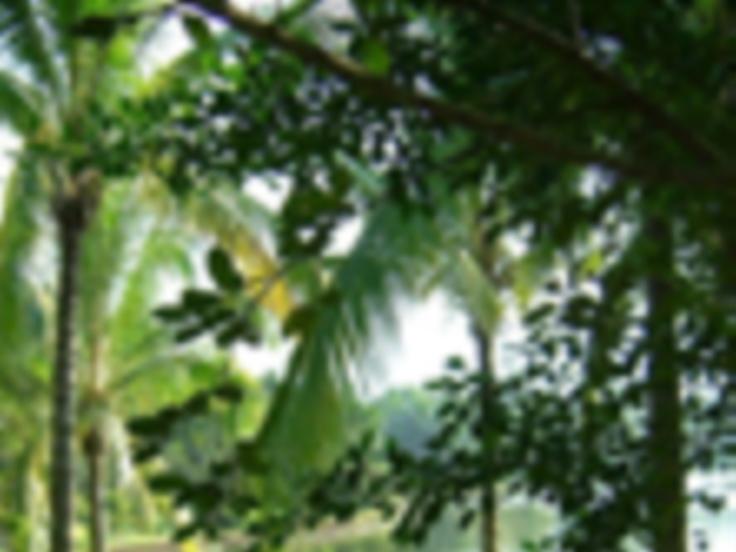 Hainan Island In-depth Exploration