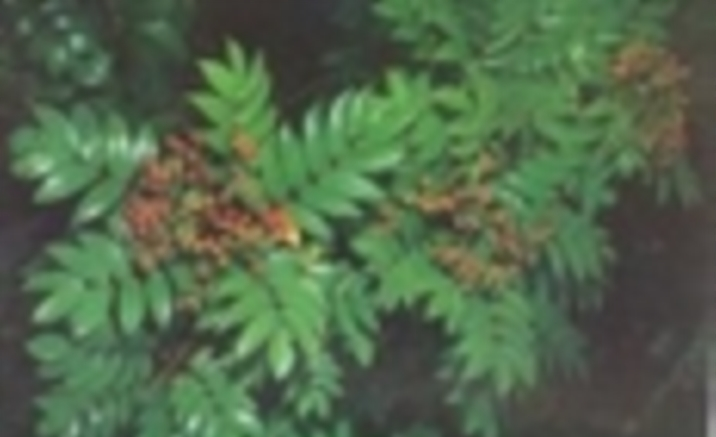 GEF Helps Conserve Biodiversity on Mount Huangshan