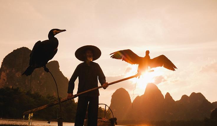 Les cormorans de Guilin
