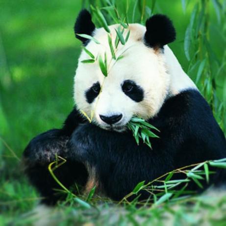 Panda Tours