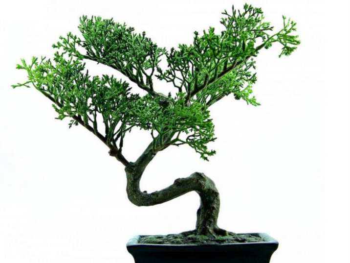 Chinese Bonsai, art of mini plant