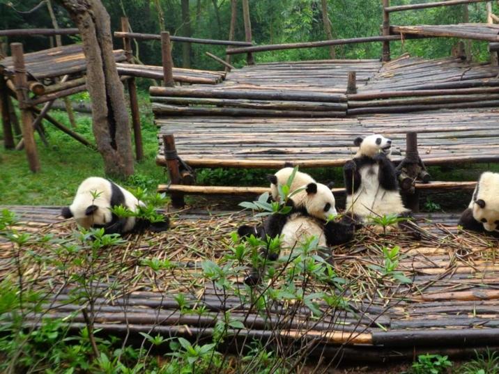 Chongqing Zoo