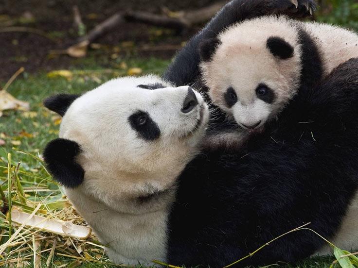 China Panda Adventure Family Tour