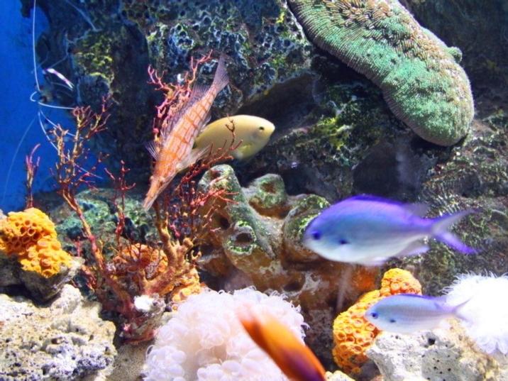 Polar Region Marine Animals World