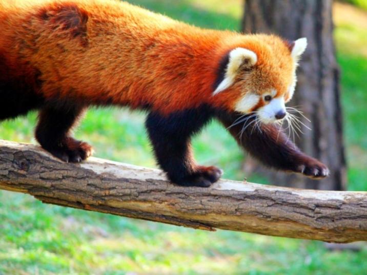 Dalian's Forest Zoo