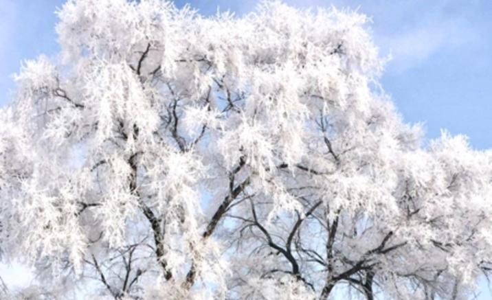 霧凇島の樹氷を観測 吉林が冬の観光シーズンに
