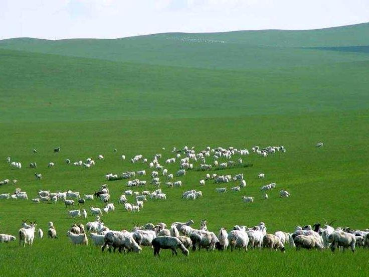 満喫大草原