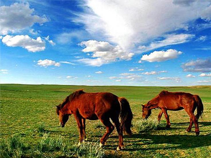 La prairie vaste de la Mongolie Intérieure