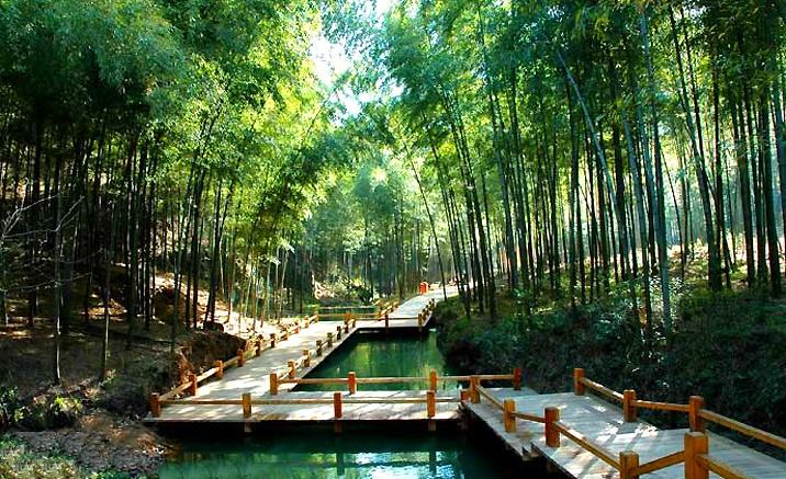 Forêts de bambous du delta du fleuve Yangtsé