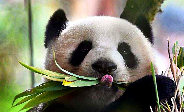 Des bambous frais au petit-déjeuner