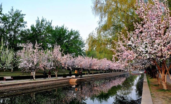 北京元大都遺跡公園での花見