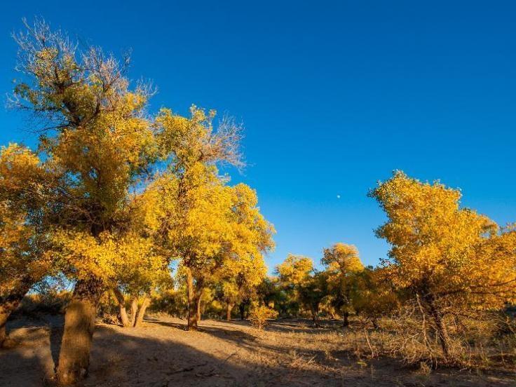 Inner Mongolia in Golden Fall Camper Tour