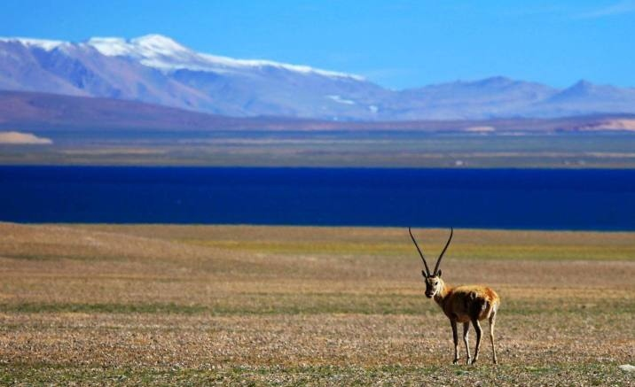 Tibetan nature reserve dismantled the pasture fences