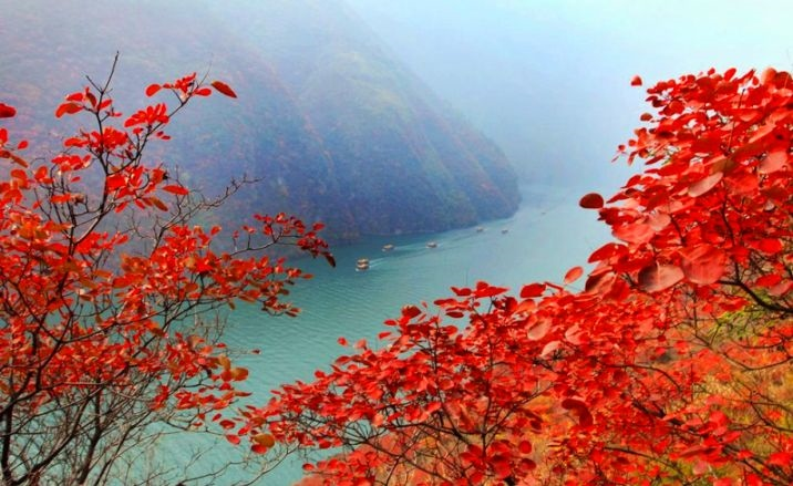 The 13th Wushan International Red Leaves Festival launches