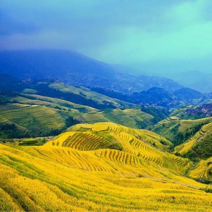 La rizière en terrasse de Longsheng