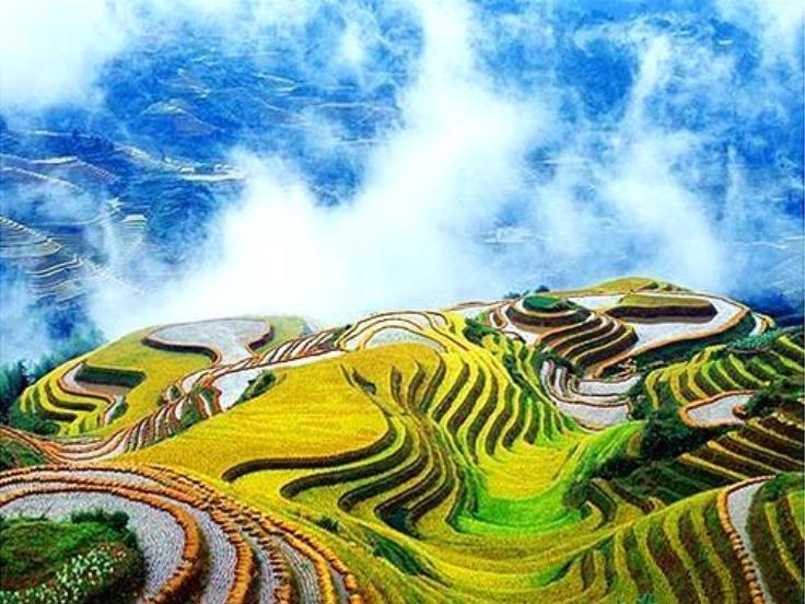 Arrozales de Yangshuo