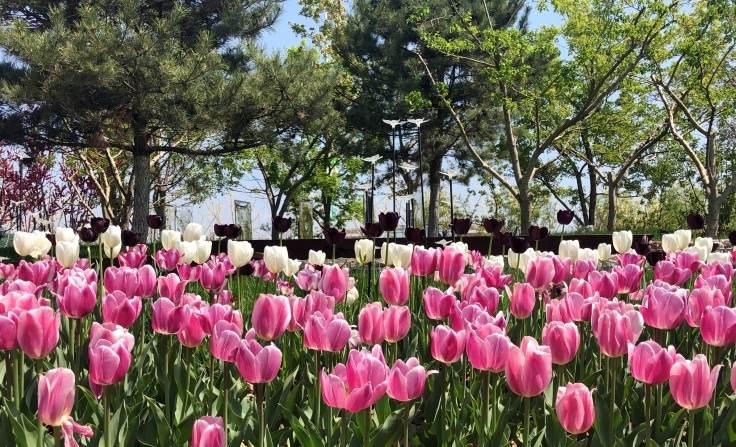 Beijing Capital Tour with Horticultural Expo