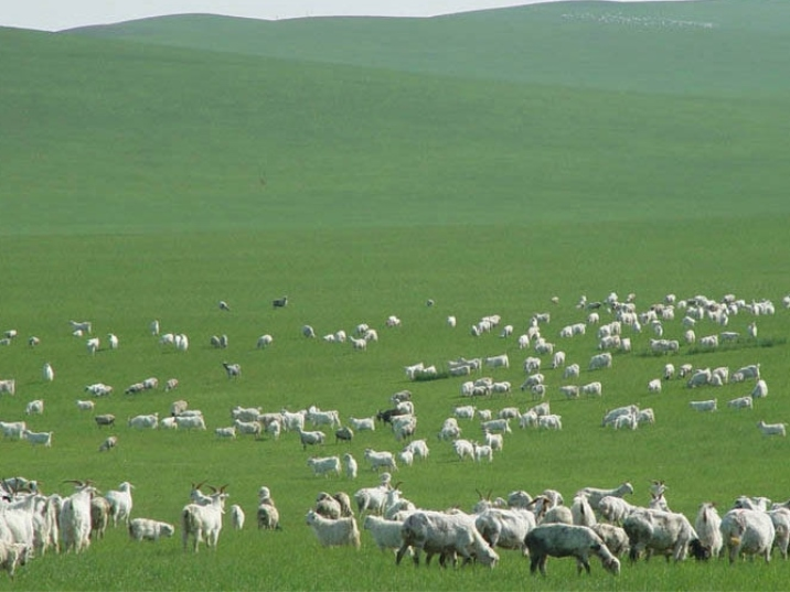 Ordos Grassland