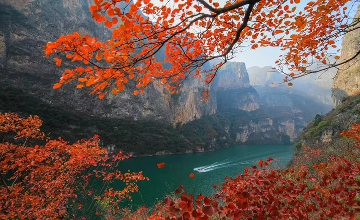 Wushan to open the International Red Leaf Festival