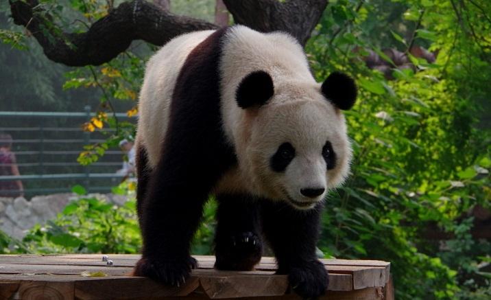 Beijing Zoo launches online service
