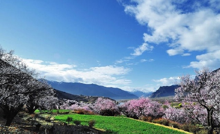 Tibet Nyingchi Peach Blossom Festival to open on April 2
