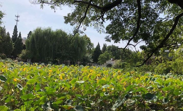 The 7th Yongchuan Lotus Appreciation & Picking Festival opens in Chongqing