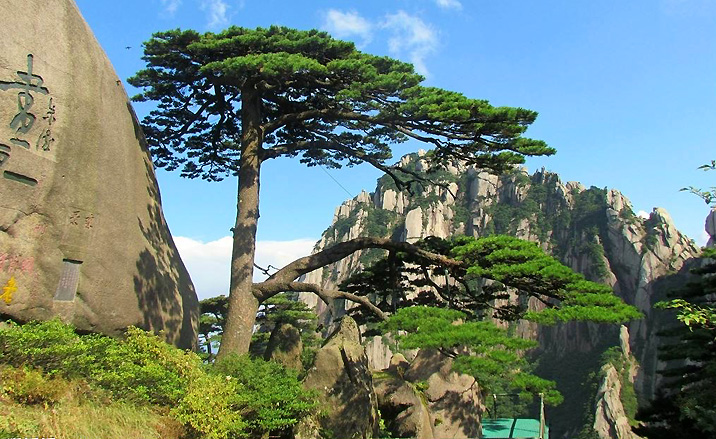Les pins étranges des Monts Huangshan