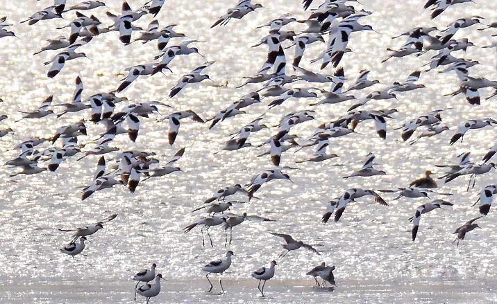 Tianjin : station de transfert pour les oiseaux migrateurs -2