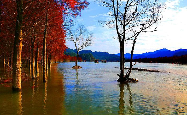 Forêt de mélèzes du parc national forestier de la Baie de Qinglong (Anhui)
