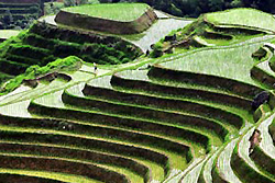 rizières en terrasse Longji au village Ping'an - Longsheng -2