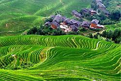 rizières en terrasse Longji au village Ping'an - Longsheng -3
