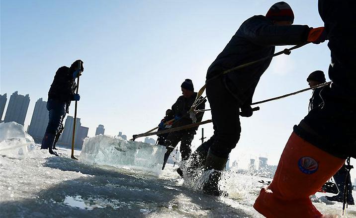 Le début de la saison de collecte de glace à Harbin