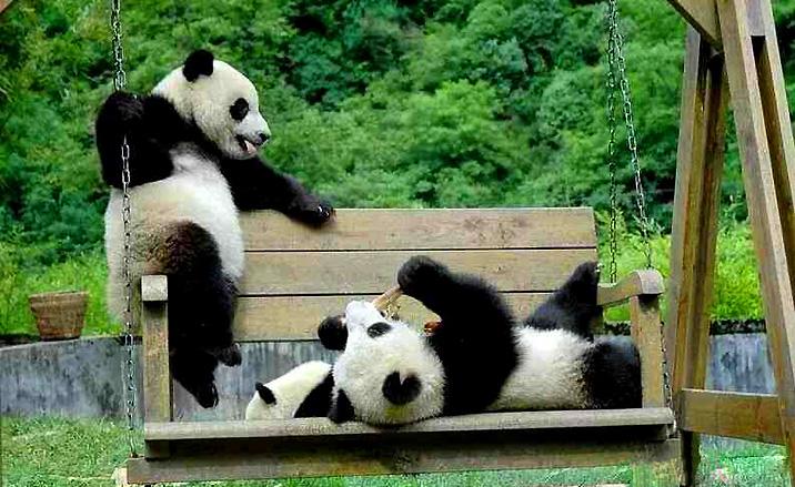 Pandas géants de la province du Sichuan